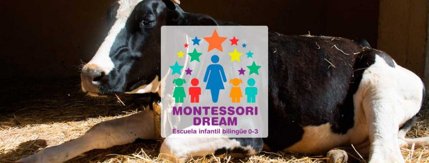 destacada-granja-escuela-montessori-dream